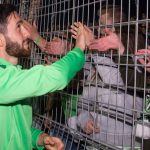 Comunio-Gerüchteküche: Verliert Wolfsburg einen Zehner? Zwei Gladbacher vor dem Absprung