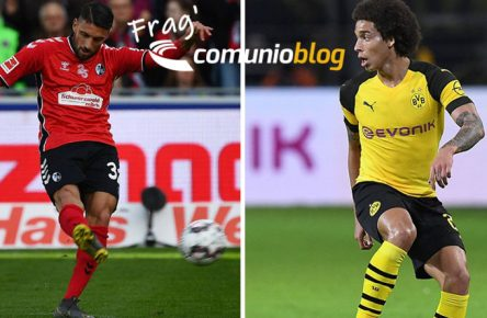 grifo-witsel